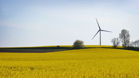 Wind farm in yellow canola field. And a blue sky stock video footage