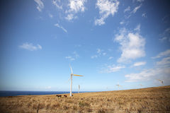 Wind farms along the North shore coastline of the big island of Stock Image