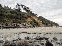 Wind fegte Bäume an der schroffen Ozeanuferzone Stockbild