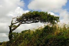 Wind fegte Baum. Lizenzfreie Stockfotos