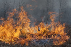 Wind in the fire. Contribute higher flames. Photo is from special nature protection action intended to make better habitat for rare heathland connected species Royalty Free Stock Photo