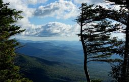 Wind Flagged Tree at the Summit. A nature image near the summit of Mount Mansfield looking south toward along the green mountain national forest with a dramatic royalty free stock photo