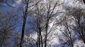 Wind in the forest. View on tree tops of trees in spring from the ground. Wind in the forest. View on tree tops from the ground stock footage