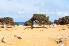 From the wind formed Juniper at the Lafrakas beach. Gavdos, Greece Stock Photo