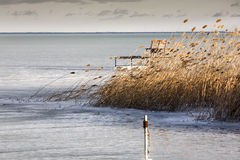 Wind. Frozen surface of a lake with some reeds in wind Royalty Free Stock Photography