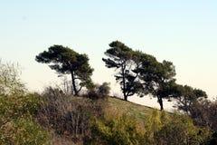 Wind geblazen bomen #1 Stock Afbeeldingen