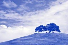 Wind geblazen boom boven op grote grasrijke heuvel in Sonoma royalty-vrije stock afbeelding