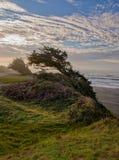 Wind Geblazen Cipreslijst Bluff royalty-vrije stock afbeeldingen