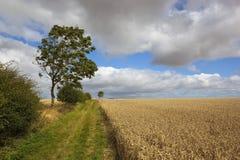 Wind geblazen de zomerlandschap Stock Afbeelding