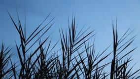 Wind geblazen gras op blauwe hemel stock footage