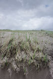 Wind geblazen gras op zandduin.  De Kust van Oregon Royalty-vrije Stock Foto
