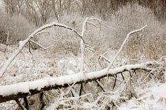 Wind-gefallener Baum im Winter Stockfotografie