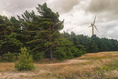 Wind generator in the dunes. A wind generator in a pine forest in the dunes of the Baltic Sea in a strong wind Stock Photos