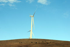 Wind generators cattle Stock Images