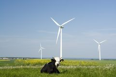 Wind generators and cow. A view of several wind-driven electricity generators in an open pasture with a black and white cow in the foreground Stock Photography