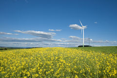 Wind generators rape field Stock Image
