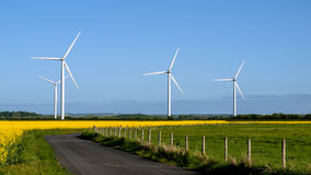 Wind generators on rape field. Stock Image