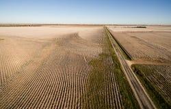 Cotton Plantation Green Energy Farm Field Wind Power Generation Stock Photos