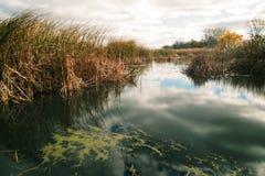 Wind-gepeitschte Sumpfgebiete Lizenzfreie Stockfotos
