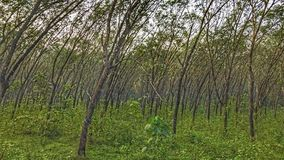 Wind Geslagen Bomen Stock Foto's