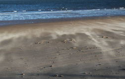Wind Geveegd Strand, Norfolk, Engeland stock afbeelding
