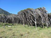 Wind geveegde bomen en weiden Stock Foto
