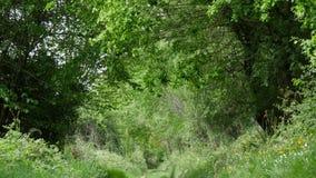 Wind in het gebladerte, weg in het platteland stock videobeelden