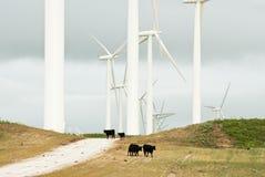 Wind-Leistung Lizenzfreies Stockbild