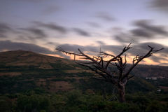 And the wind. Lot in the new church, Mafra, Portugal Royalty Free Stock Images