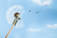 Wind Royalty Free Stock Images