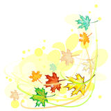 Wind and maple leaves Stock Photo