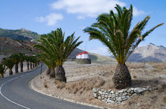 Wind mills and palm trees. Small wind mills and palm trees by the road above Porto Santo harbour. Madeira, Portugal Royalty Free Stock Images