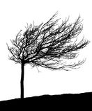 Wind-molded tree silhouette. Silhouette of a leafless wind-molded tree during winter Vector Illustration