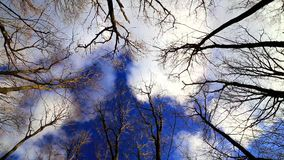 Wind moves branches in forest on blue sky stock footage