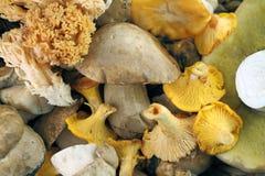 Wind mushrooms Stock Image