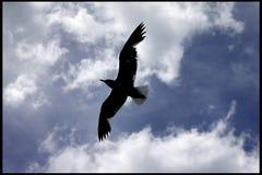 Wind onder de vleugels stock foto