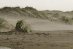 Wind op het strand stock foto