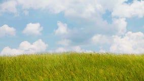 Wind over grasgebied stock video