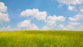 Wind over grass field stock footage