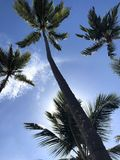 Wind and palm trees royalty free stock photos