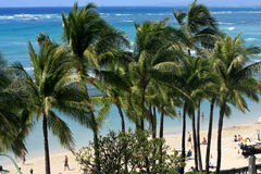 Wind in the palm tress at Waikiki. Stock Image