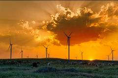 Wind park - a renewable energy source. Sheeps in rural Romanian wind park on sunset royalty free stock photography