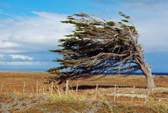 Wind of patagonia. In Tierra del Fuego, Chile Royalty Free Stock Photos