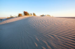 Wind pattern on sand dune Stock Photography