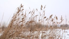 In the wind stock footage