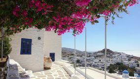 Wind playing with flower shrub on a terrace of traditional white house, Ios island, Greece. stock video