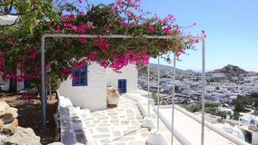 Wind playing with flower shrub on a terrace of traditional white house, Ios island, Greece. stock video footage