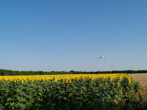 Wind power farm. Located in sunflower field Royalty Free Stock Image