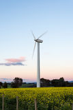 Wind power generator. A single wind turbine stands in an agricultural field at sunset Royalty Free Stock Photography