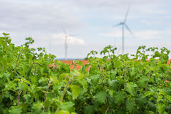 Wind power installations in agriculture the country. Stock Image